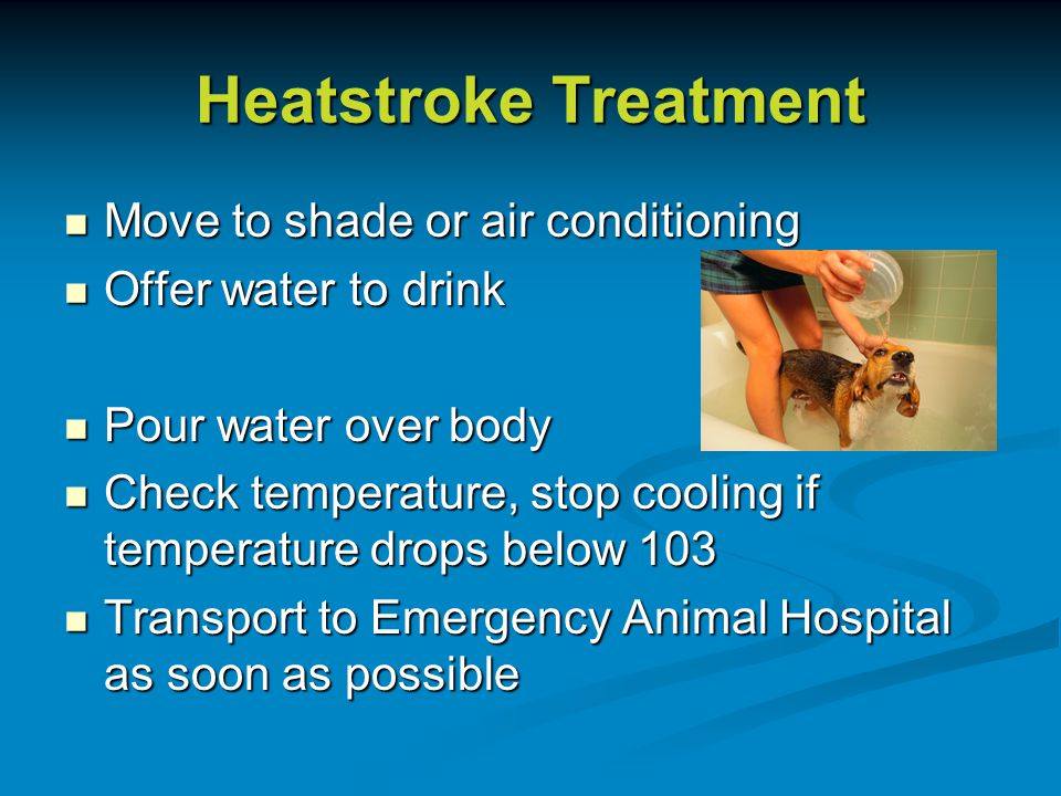 Heatstroke Treatment Move to shade or air conditioning Move to shade or air conditioning Offer water to drink Offer water to drink Pour water over body Pour water over body Check temperature, stop cooling if temperature drops below 103 Check temperature, stop cooling if temperature drops below 103 Transport to Emergency Animal Hospital as soon as possible Transport to Emergency Animal Hospital as soon as possible