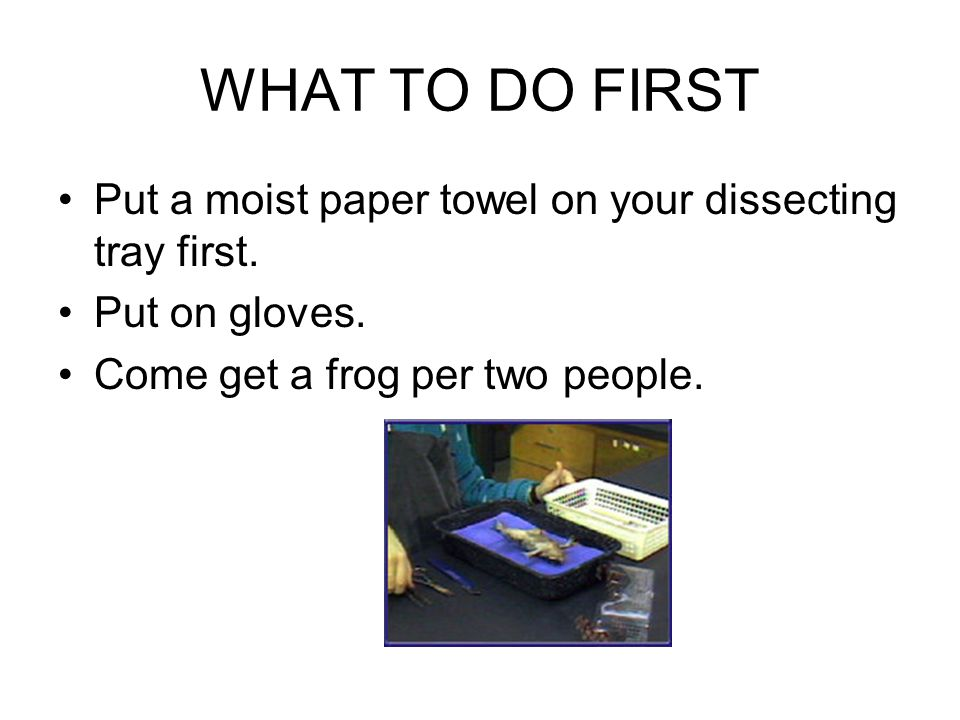 WHAT TO DO FIRST Put a moist paper towel on your dissecting tray first.