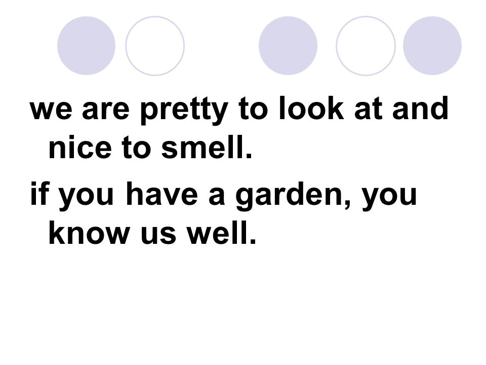 we are pretty to look at and nice to smell. if you have a garden, you know us well.
