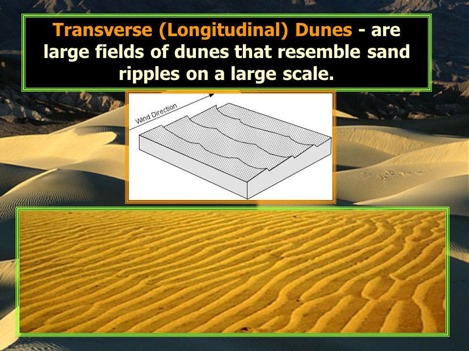 Transverse (Longitudinal) Dunes - are large fields of dunes that resemble sand ripples on a large scale.