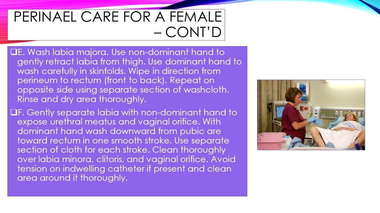 PERINAEL CARE FOR A FEMALE – CONT'D  E. Wash labia majora. Use non-dominant hand to gently retract labia from thigh. Use dominant hand to wash carefu