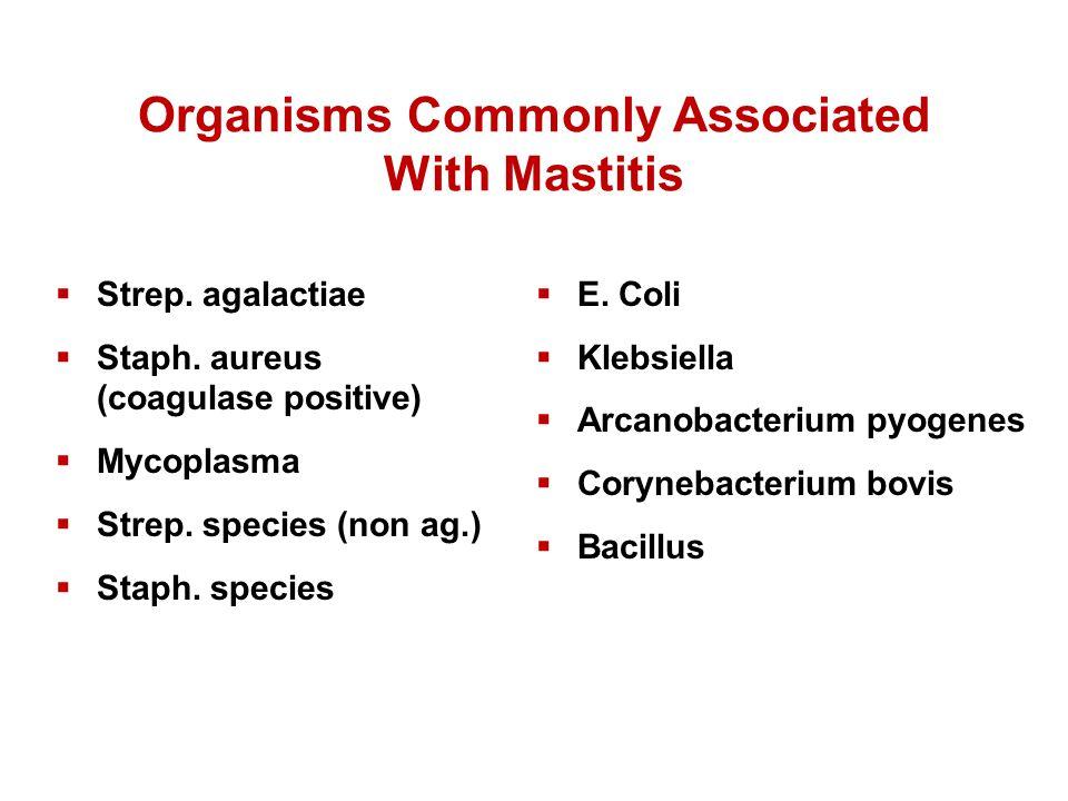 Organisms Commonly Associated With Mastitis  Strep. agalactiae  Staph. aureus (coagulase positive)  Mycoplasma  Strep. species (non ag.)  Staph.