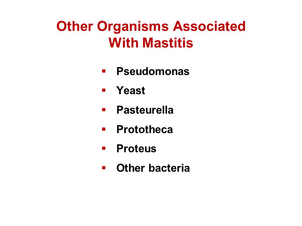 Other Organisms Associated With Mastitis  Pseudomonas  Yeast  Pasteurella  Prototheca  Proteus  Other bacteria