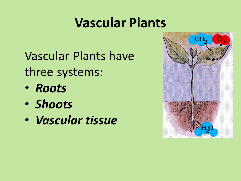Vascular Plants Vascular Plants have three systems: Roots Shoots Vascular tissue