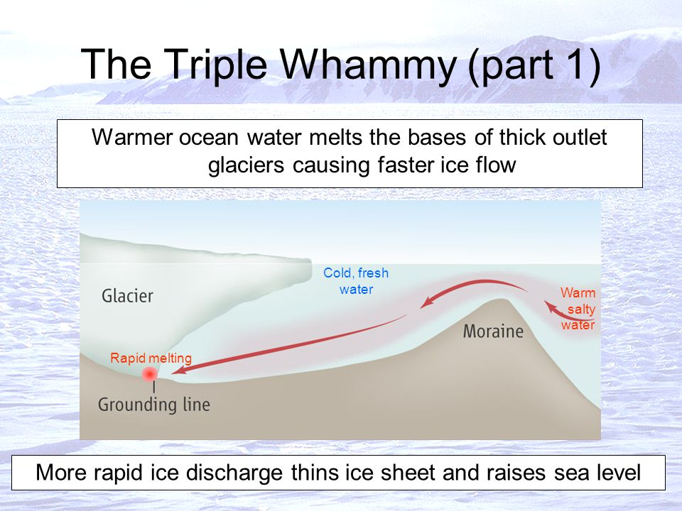 The Triple Whammy (part 1) Warmer ocean water melts the bases of thick outlet glaciers causing faster ice flow More rapid ice discharge thins ice sheet and raises sea level Cold, fresh water Warm, salty water Rapid melting