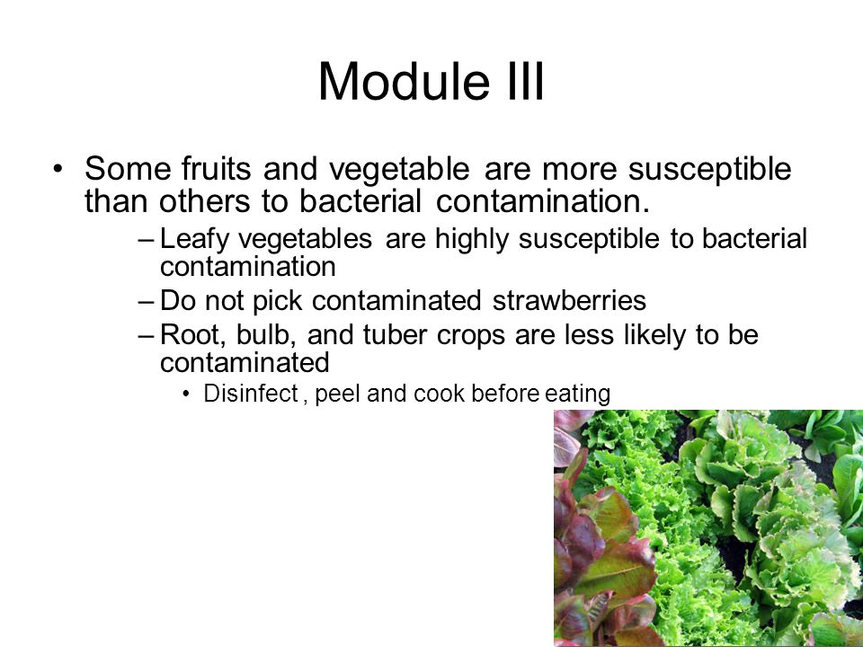 Module III Some fruits and vegetable are more susceptible than others to bacterial contamination.