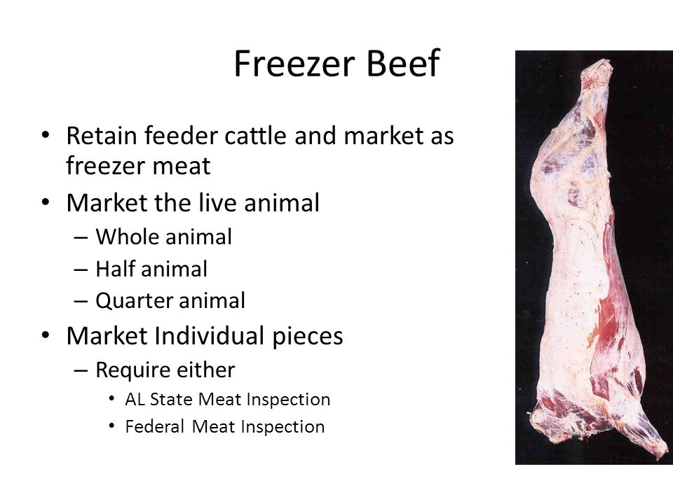 Freezer Beef Retain feeder cattle and market as freezer meat Market the live animal – Whole animal – Half animal – Quarter animal Market Individual pieces – Require either AL State Meat Inspection Federal Meat Inspection