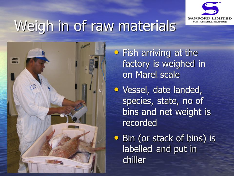 Weigh in of raw materials Fish arriving at the factory is weighed in on Marel scale Fish arriving at the factory is weighed in on Marel scale Vessel, date landed, species, state, no of bins and net weight is recorded Vessel, date landed, species, state, no of bins and net weight is recorded Bin (or stack of bins) is labelled and put in chiller Bin (or stack of bins) is labelled and put in chiller
