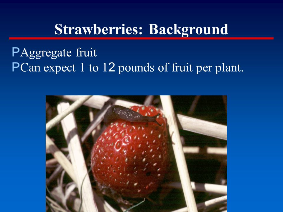 Strawberries: Background P Aggregate fruit P Can expect 1 to 1 2 pounds of fruit per plant.