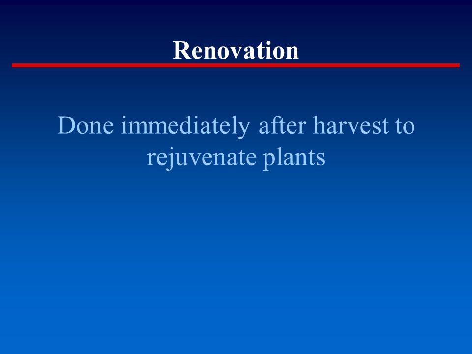 Renovation Done immediately after harvest to rejuvenate plants