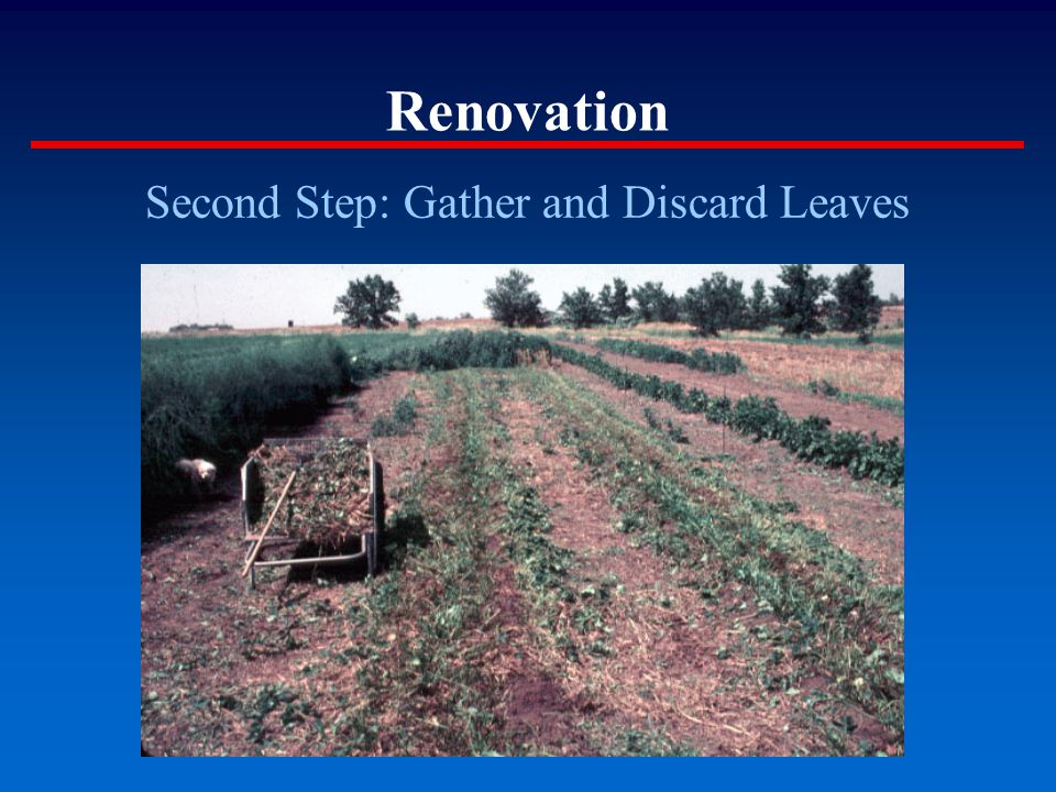 Renovation Second Step: Gather and Discard Leaves