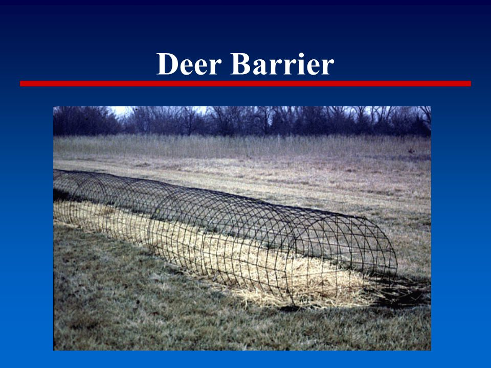 Deer Barrier