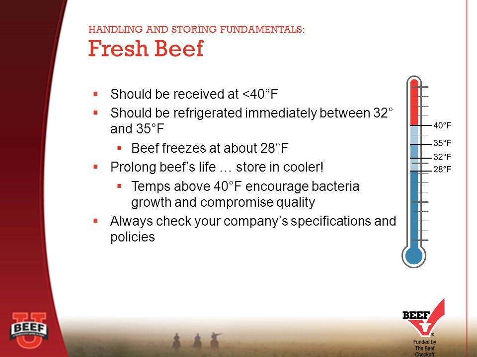  Should be received at <40°F  Should be refrigerated immediately between 32° and 35°F  Beef freezes at about 28°F  Prolong beef's life … store in cooler.