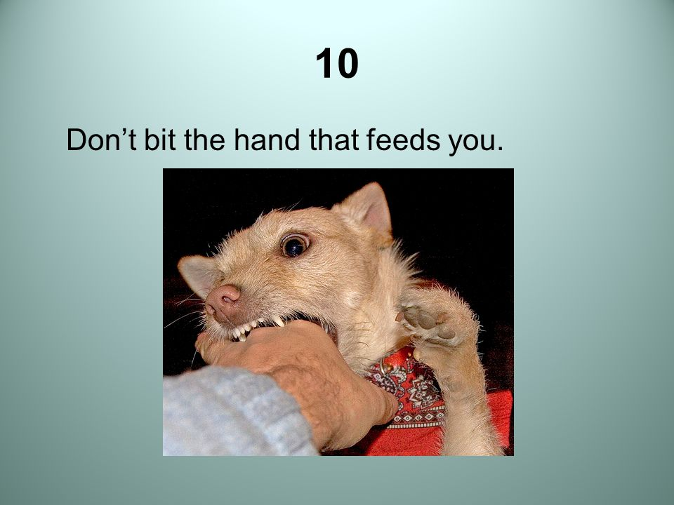 10 Don't bit the hand that feeds you.