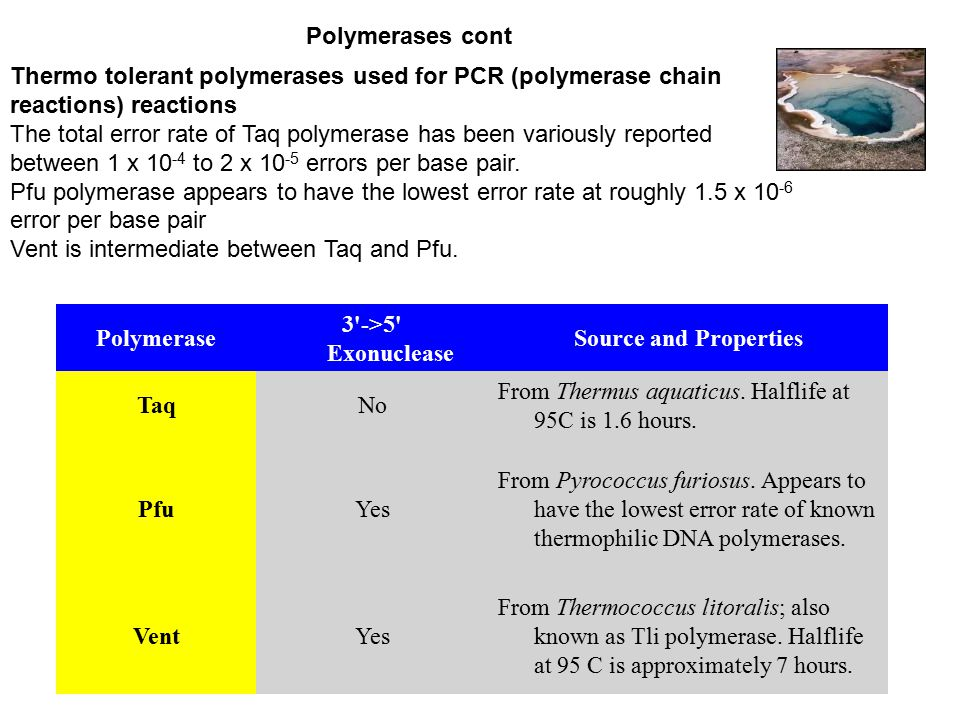 Polymerase 3 ->5 Exonuclease Source and Properties TaqNo From Thermus aquaticus.