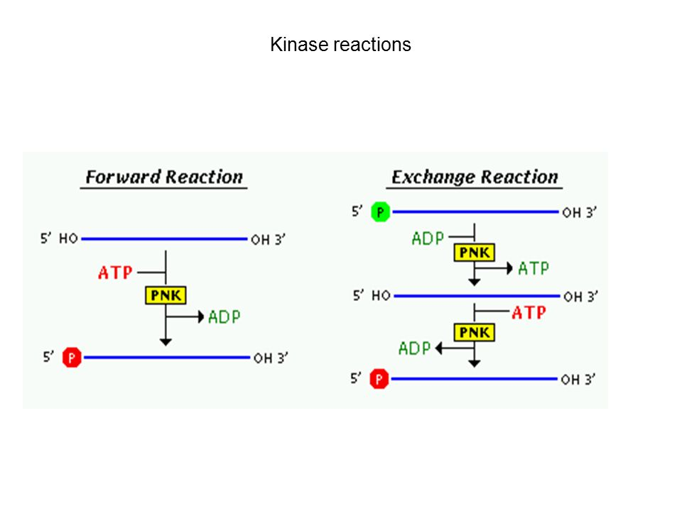 Kinase reactions