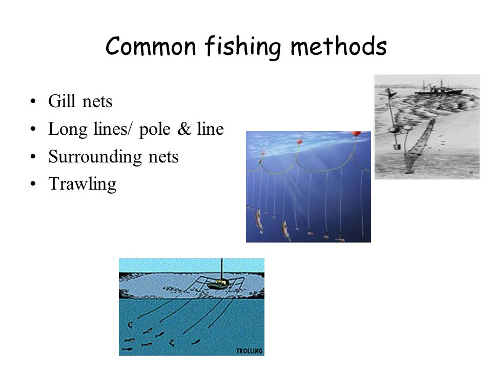 Common fishing methods Gill nets Long lines/ pole & line Surrounding nets Trawling