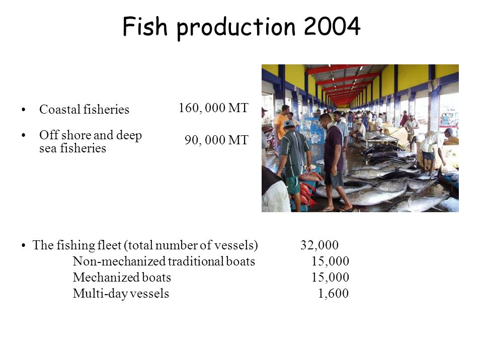 Fish production 2004 Coastal fisheries Off shore and deep sea fisheries The fishing fleet (total number of vessels) 32,000 Non-mechanized traditional boats 15,000 Mechanized boats 15,000 Multi-day vessels 1,600 160, 000 MT 90, 000 MT