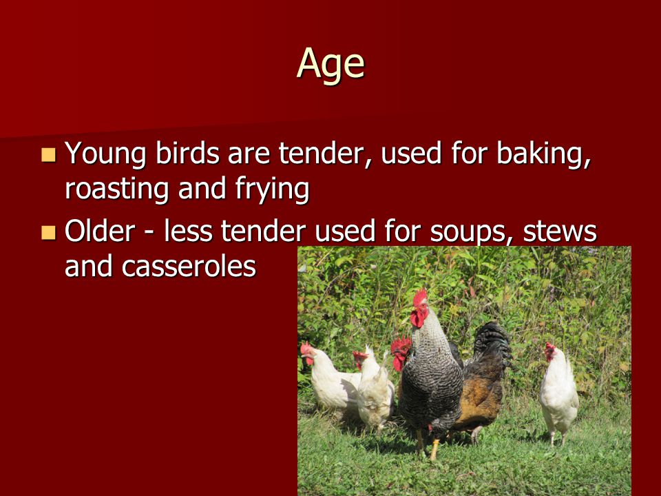 Age Young birds are tender, used for baking, roasting and frying Young birds are tender, used for baking, roasting and frying Older - less tender used for soups, stews and casseroles Older - less tender used for soups, stews and casseroles