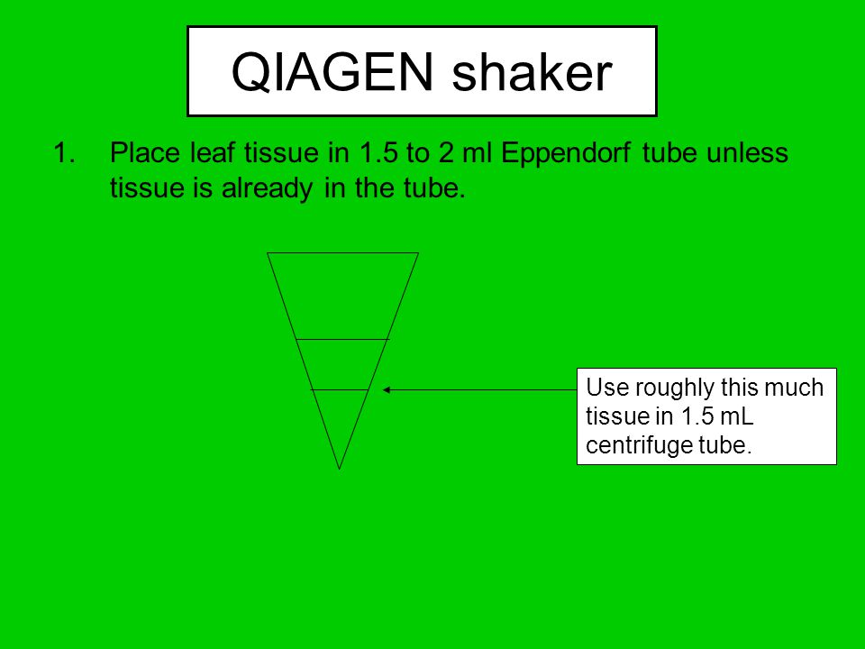 QIAGEN shaker 1.Place leaf tissue in 1.5 to 2 ml Eppendorf tube unless tissue is already in the tube.