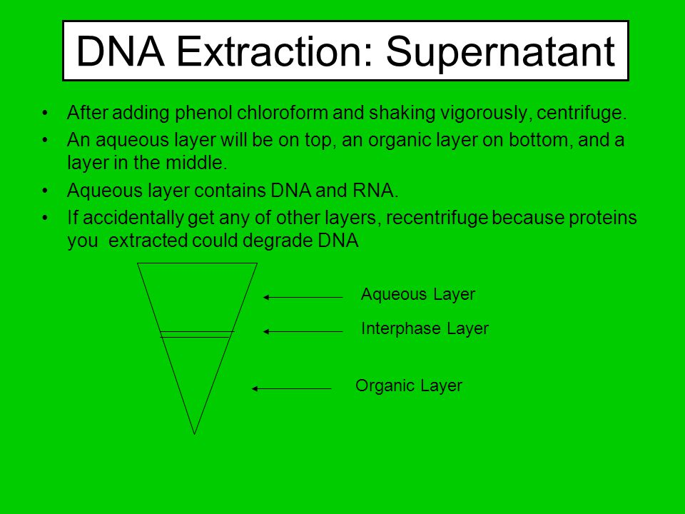 DNA Extraction: Supernatant After adding phenol chloroform and shaking vigorously, centrifuge. An aqueous layer will be on top, an organic layer on bo