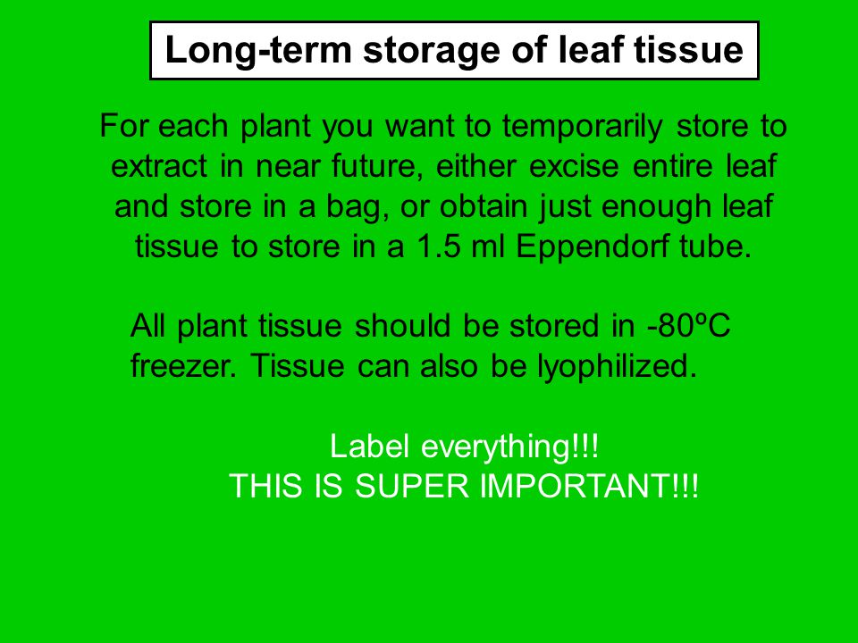 For each plant you want to temporarily store to extract in near future, either excise entire leaf and store in a bag, or obtain just enough leaf tissu