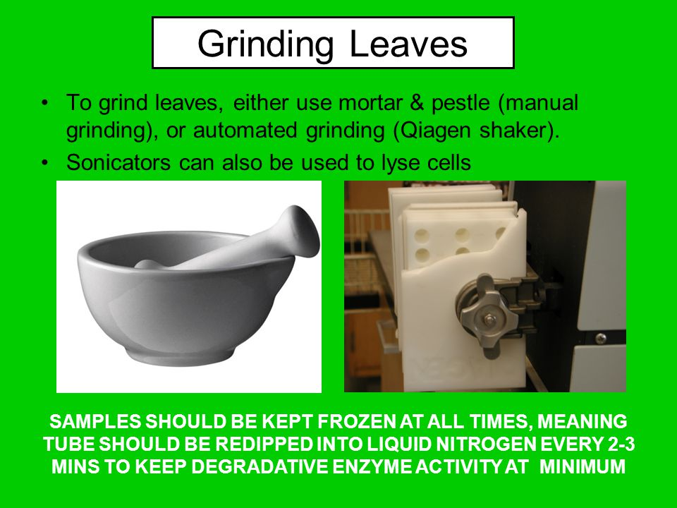 Grinding Leaves To grind leaves, either use mortar & pestle (manual grinding), or automated grinding (Qiagen shaker).