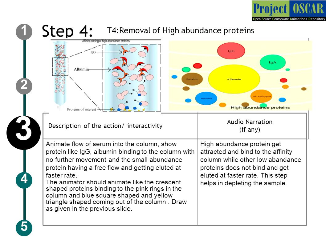 Step 4: T4:Removal of High abundance proteins 5 2 1 4 3 Audio Narration (if any) ‏ Description of the action/ interactivity Animate flow of serum into the column, show protein like IgG, albumin binding to the column with no further movement and the small abundance protein having a free flow and getting eluted at faster rate.