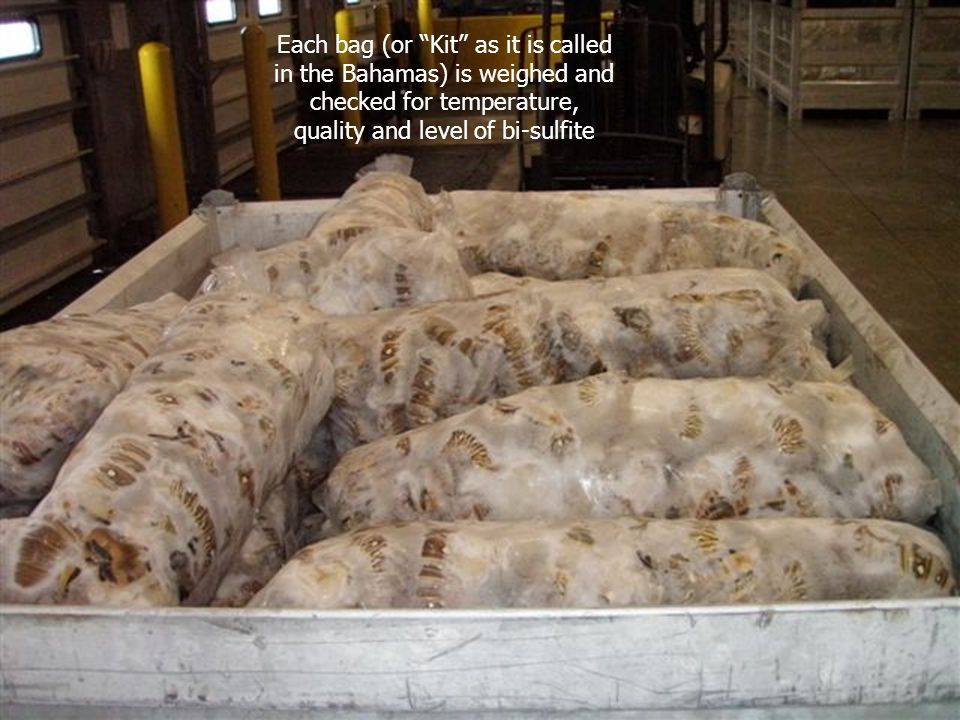 """Each bag (or """"Kit"""" as it is called in the Bahamas) is weighed and checked for temperature, quality and level of bi-sulfite"""