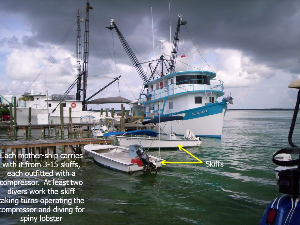 Each mother-ship carries with it from 3-15 skiffs, each outfitted with a compressor. At least two divers work the skiff taking turns operating the com