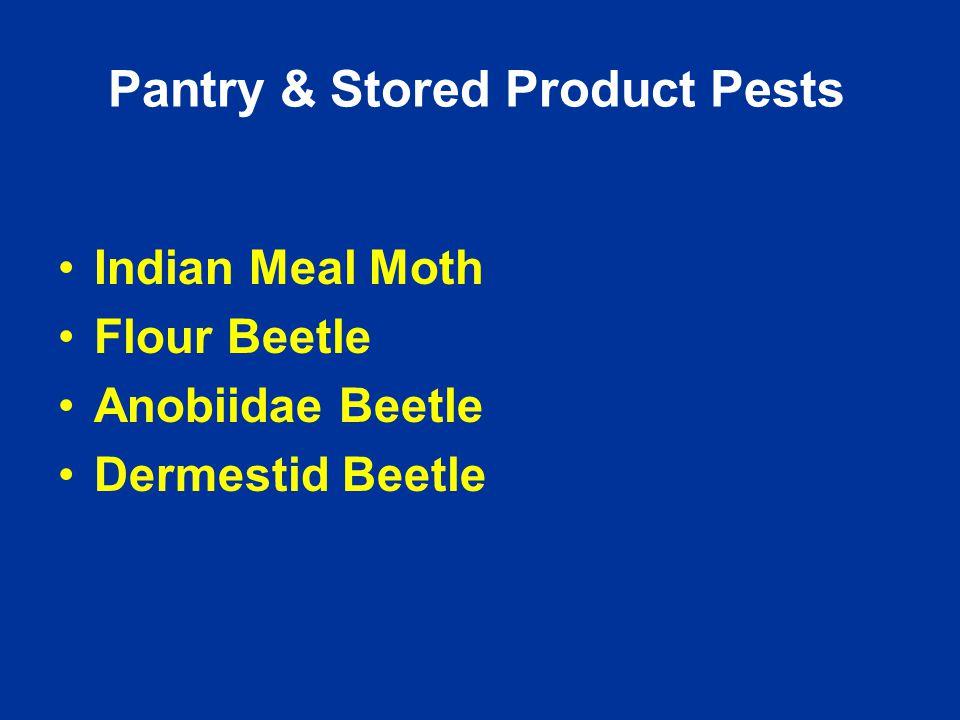 Pantry & Stored Product Pests Indian Meal Moth Flour Beetle Anobiidae Beetle Dermestid Beetle