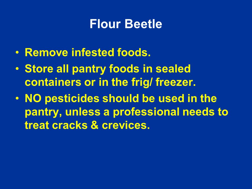 Remove infested foods. Store all pantry foods in sealed containers or in the frig/ freezer.