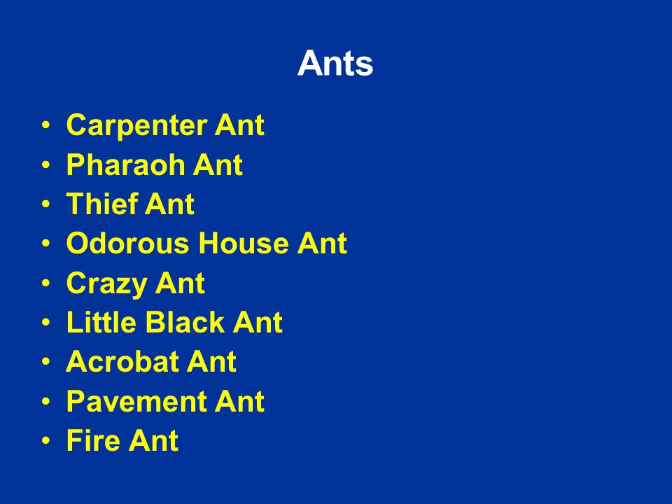 Ants Carpenter Ant Pharaoh Ant Thief Ant Odorous House Ant Crazy Ant Little Black Ant Acrobat Ant Pavement Ant Fire Ant