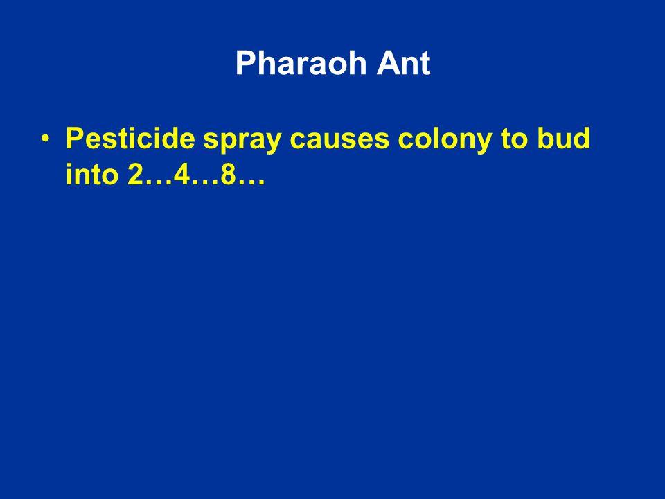 Pharaoh Ant Pesticide spray causes colony to bud into 2…4…8…