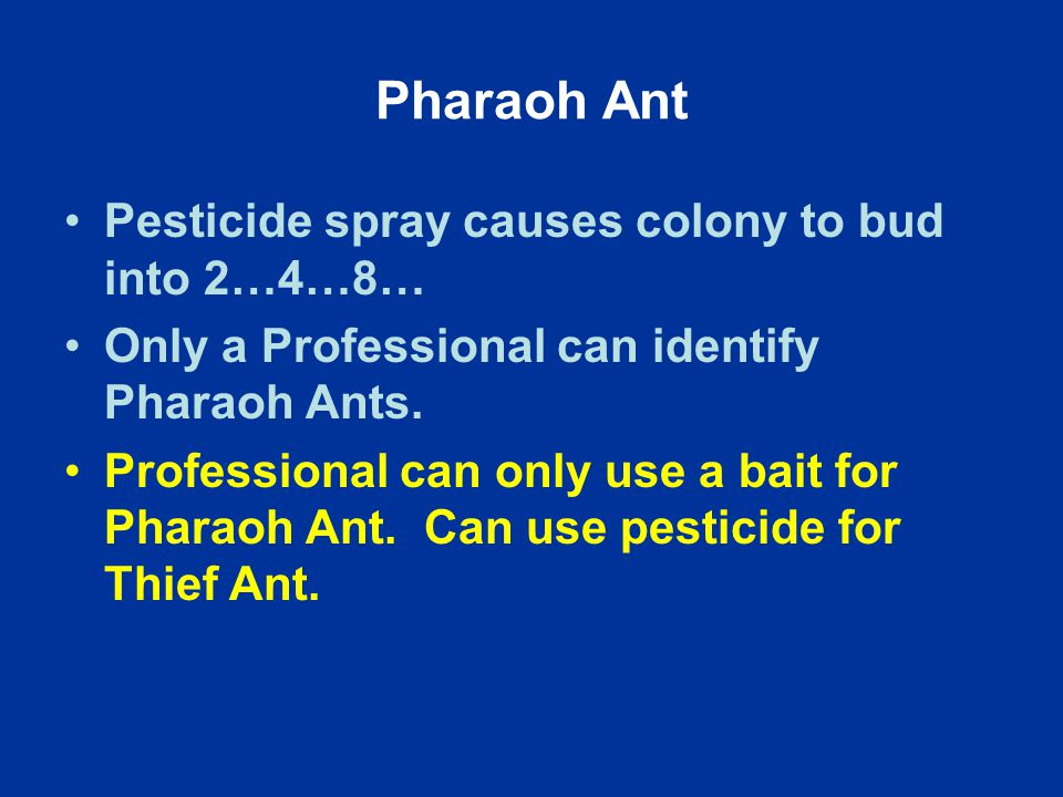 Pharaoh Ant Pesticide spray causes colony to bud into 2…4…8… Only a Professional can identify Pharaoh Ants.