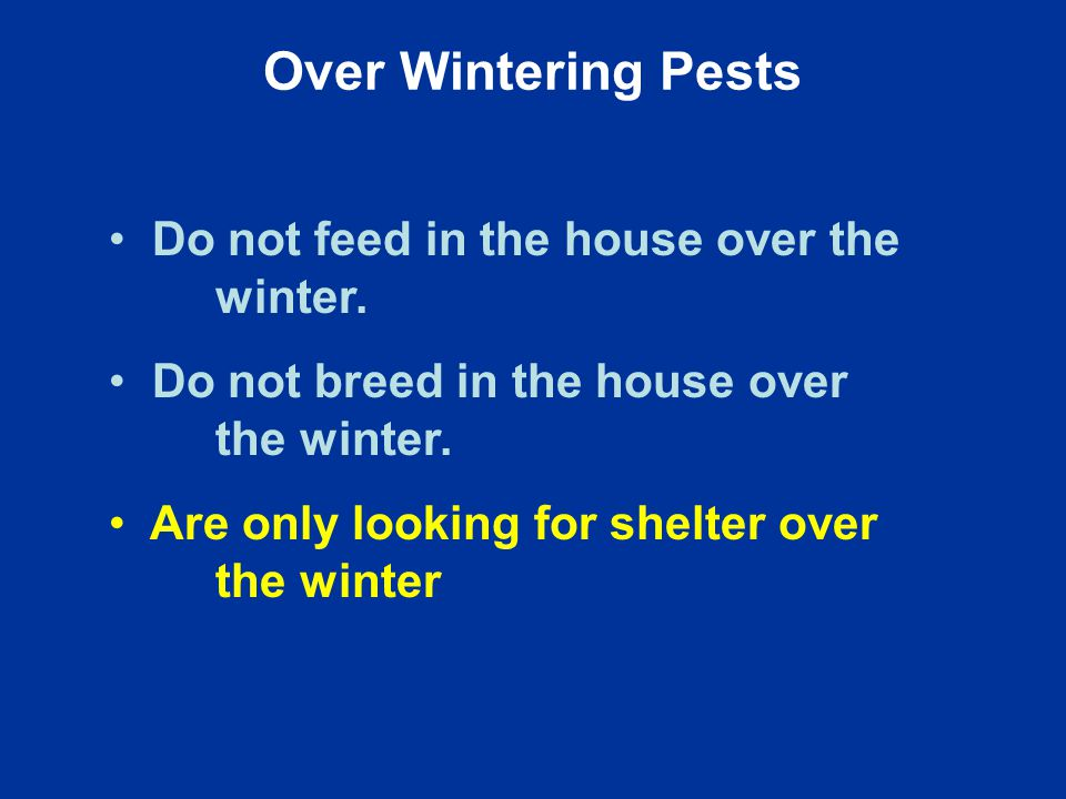 Do not feed in the house over the winter. Do not breed in the house over the winter.