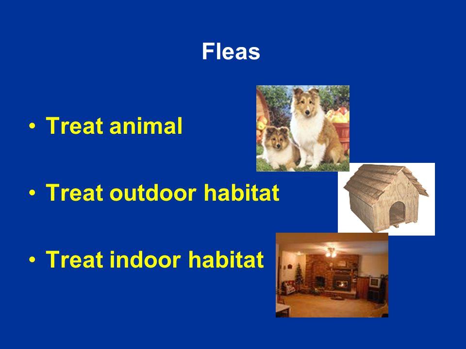 Fleas Treat animal Treat outdoor habitat Treat indoor habitat
