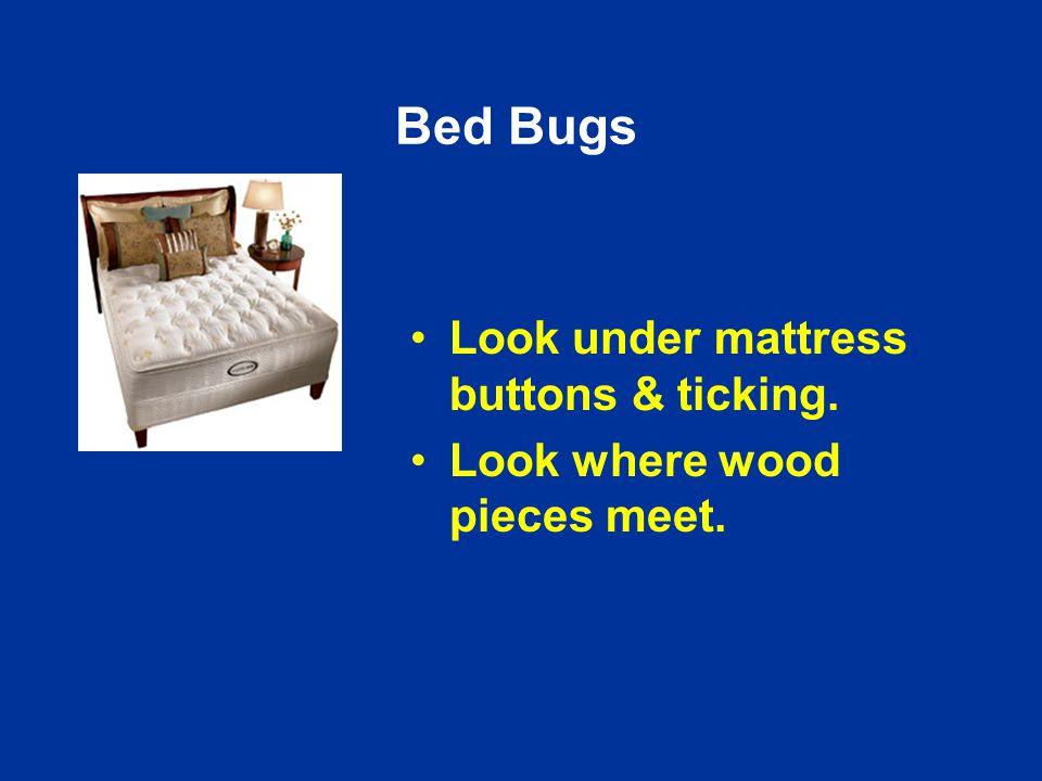 Bed Bugs Look under mattress buttons & ticking. Look where wood pieces meet.