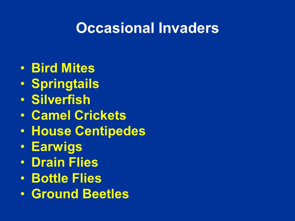 Occasional Invaders Bird Mites Springtails Silverfish Camel Crickets House Centipedes Earwigs Drain Flies Bottle Flies Ground Beetles