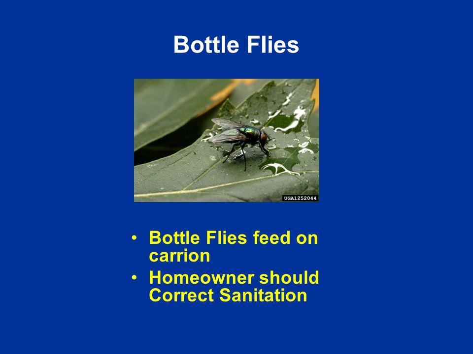 Bottle Flies Bottle Flies feed on carrion Homeowner should Correct Sanitation