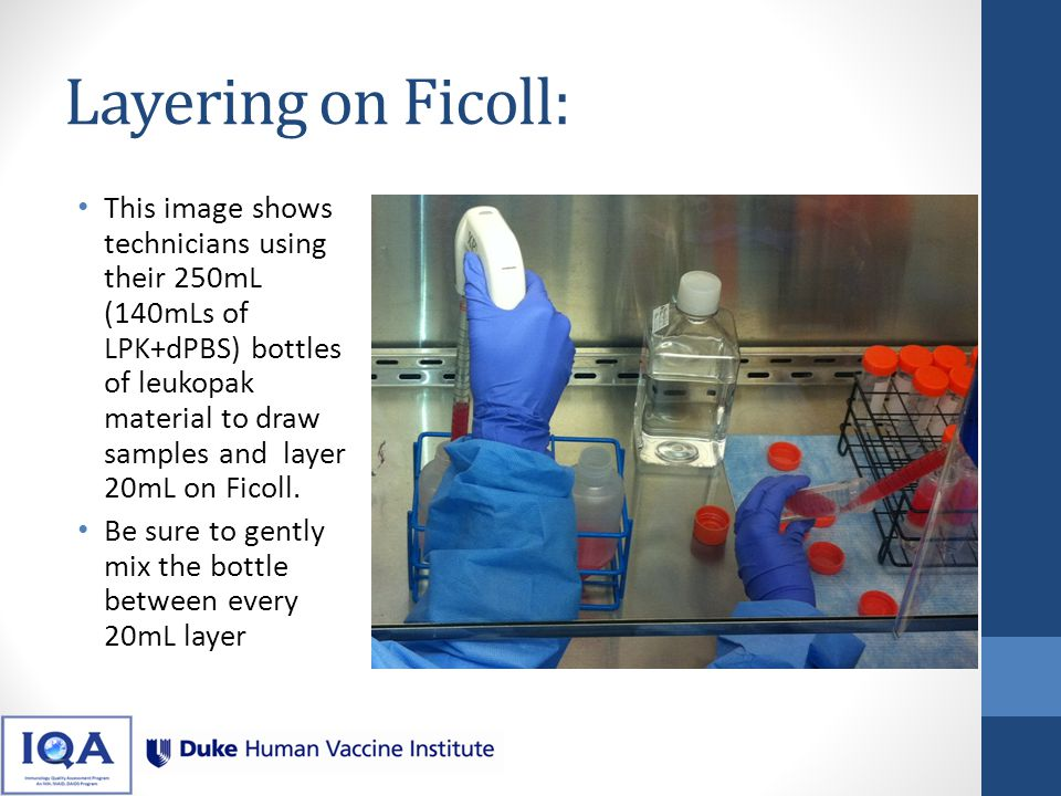 Layering: With your 140mL container gently mixed, draw 20mL into a serological pipette Tilt your Ficoll tube to approximately a 45-degree angle, and position the tube so that you have maximum visibility of the Ficoll layer Touch the tip of the pipet to the surface of the Ficoll to where you see the surface tension break slightly As carefully and slowly as possible dispense the leukopak material onto the layer of the Ficoll If you see waves at the Ficoll layer, stop dispensing until the Ficoll layer calms.