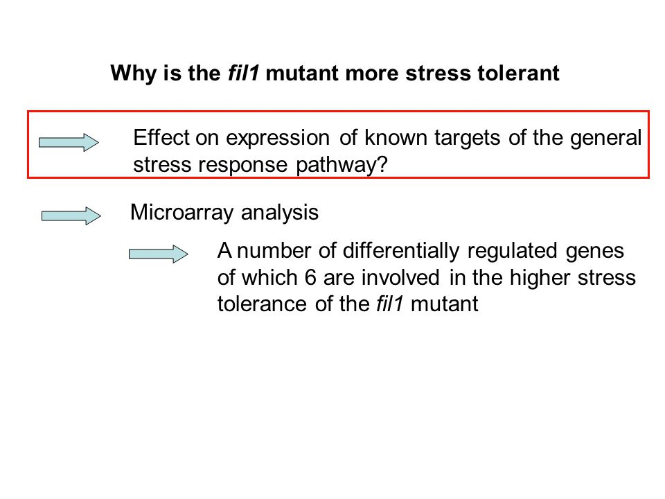 Why is the fil1 mutant more stress tolerant Microarray analysis A number of differentially regulated genes of which 6 are involved in the higher stres