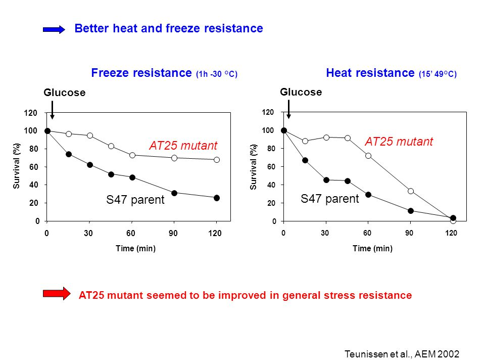 Freeze resistance (1h -30 °C) AT25 mutant seemed to be improved in general stress resistance 0 20 40 60 80 100 120 0306090120 Time (min) Survival (%)