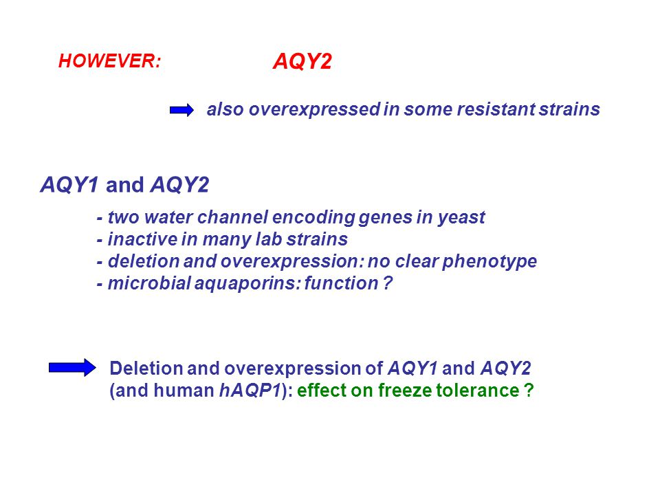 HOWEVER: AQY2 also overexpressed in some resistant strains Deletion and overexpression of AQY1 and AQY2 (and human hAQP1): effect on freeze tolerance