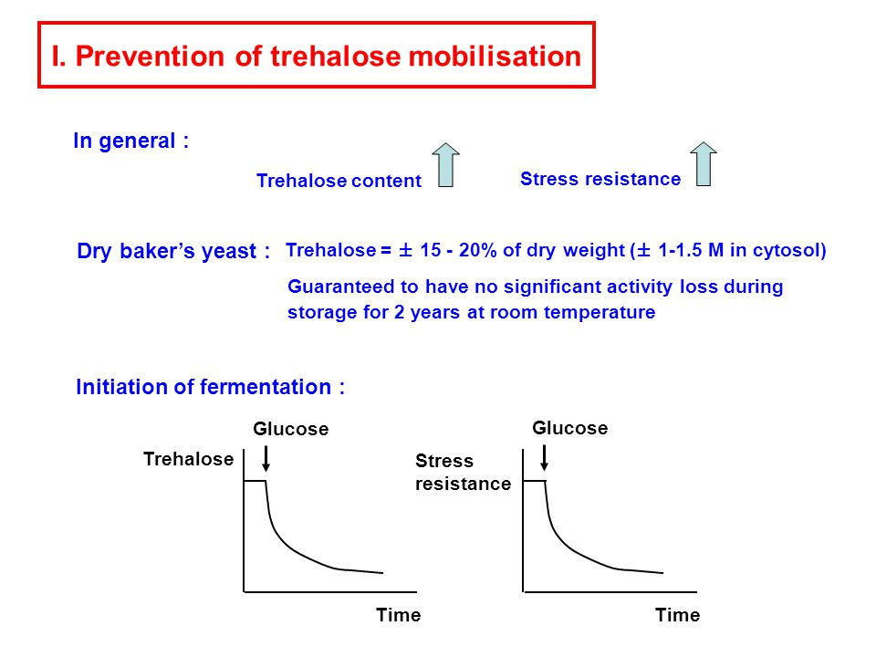 In general : I. Prevention of trehalose mobilisation Trehalose content Stress resistance Dry baker's yeast : Trehalose = ± 15 - 20% of dry weight (± 1