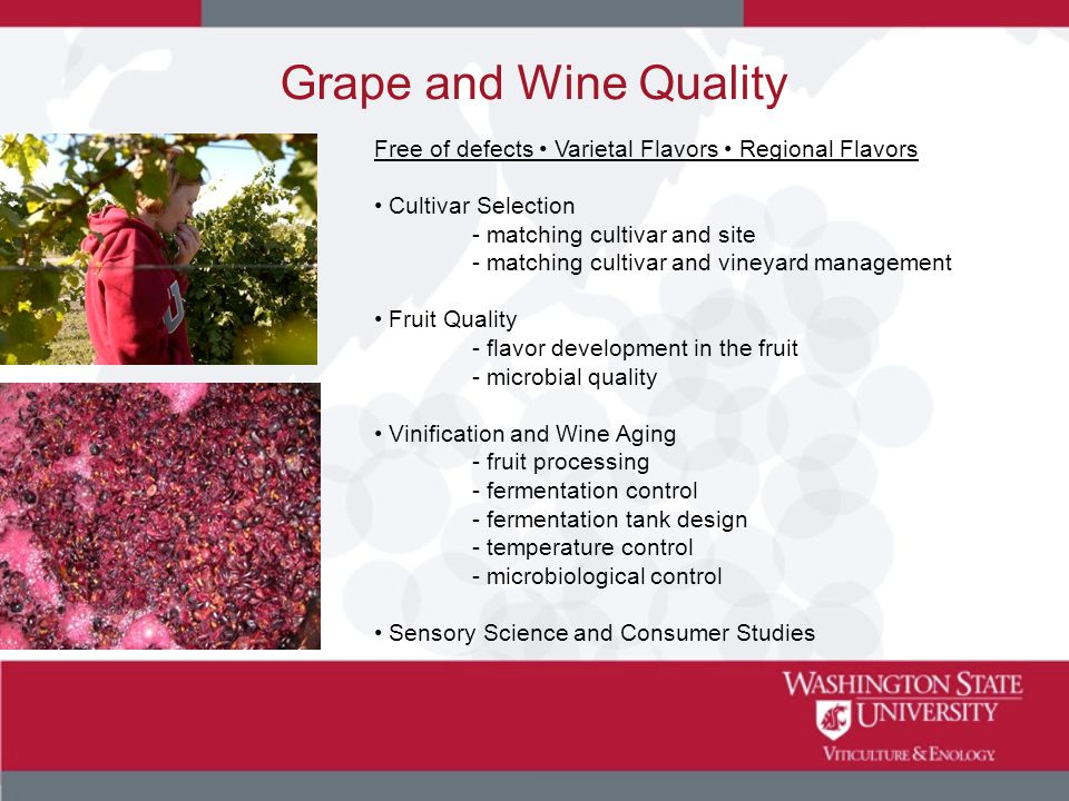Grape and Wine Quality Free of defects Varietal Flavors Regional Flavors Cultivar Selection - matching cultivar and site - matching cultivar and viney