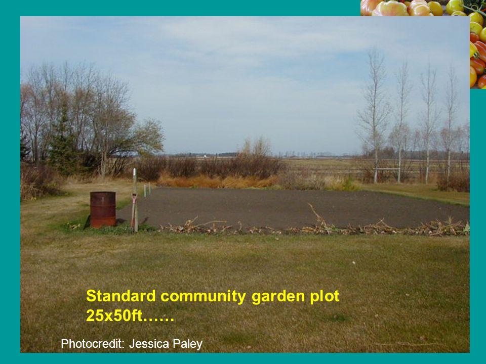 Standard community garden plot 25x50ft…… Photocredit: Jessica Paley