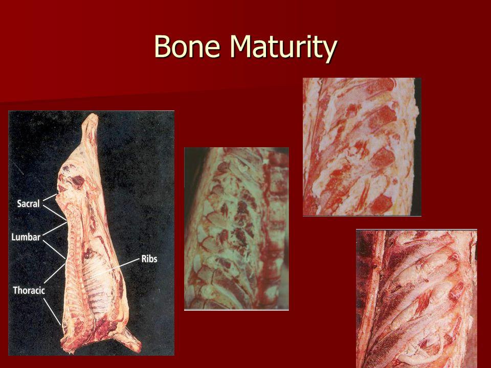Bone Maturity