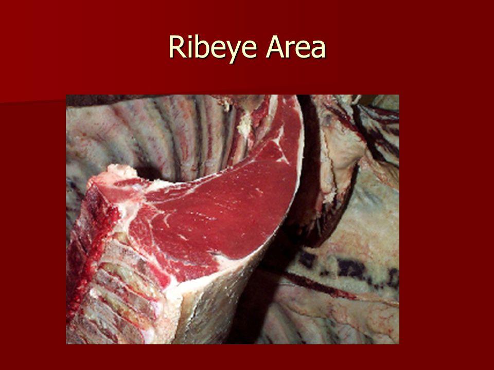Ribeye Area