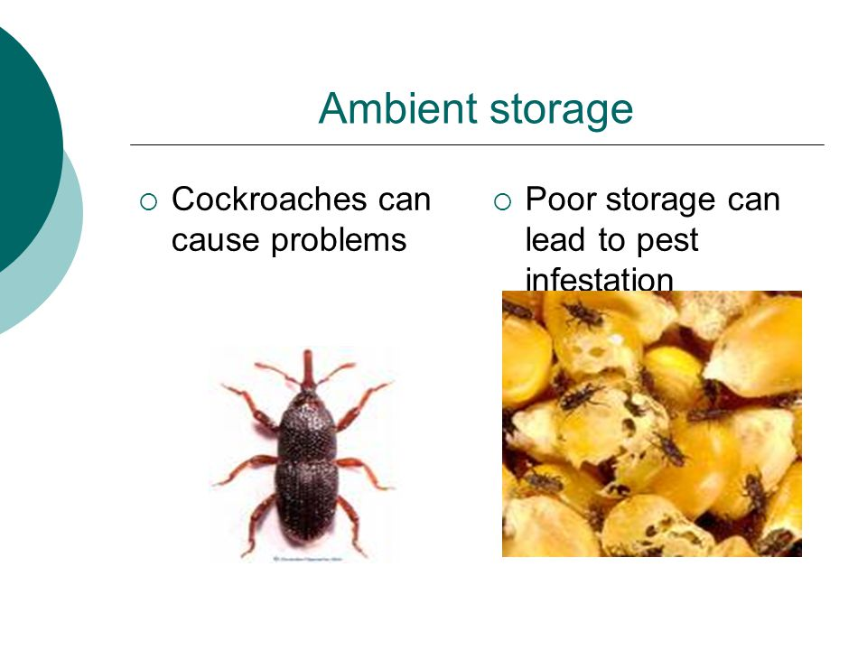 Ambient storage  Cleaning materials  It is essential that food rooms are kept clean and all food spillages are cleaned up immediately; to avoid pest infestation